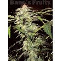 Dane's Fruity (Auto) - 10 regular seeds