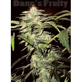 Dane's Fruity (Auto) - 10 regular seeds
